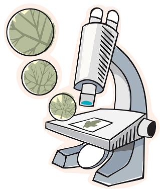 Познавательная экспериментальная деятельность дошкольников с использованием интерактивного микроскопа